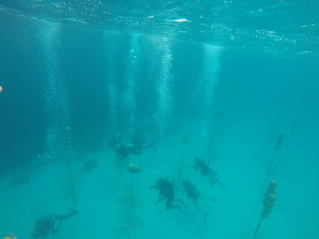 A group of students hang coral in the nursery off the shore of Klein Bonaire