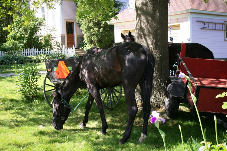 Amish horse and cart parked outside a residence in Viroqua