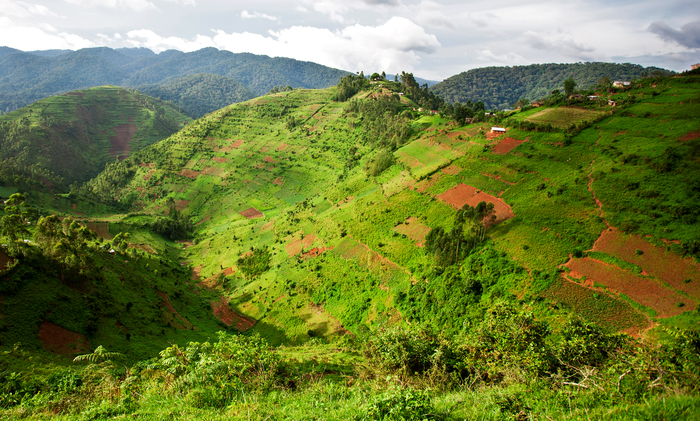 A typical human-modified landscape in southwestern Uganda comprising a complex mosaic of managed forest, rangeland, horticultural fields, and abandoned and regenerating gardens. (Photo courtesy of Shutterstock)