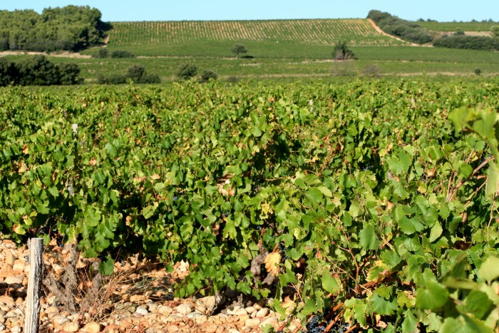 The first Appellation d'Origine Contrôlée (AOC) was Côtes du Rhône, approved in 1937, for the Rhône wine region. Each wine-producing area was entitled to create rules to discipline its viticulture (grape varieties that could be used, their proportion in the allowed blends, the aging methods, and so on), within general guidelines imposed by the central authority (photograph by Megan Cole via Flickr, CC BY 2.0).