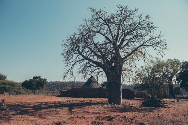 A baobab tree (Photo credit: Elina Kansikas, www.elinaphotography.com)